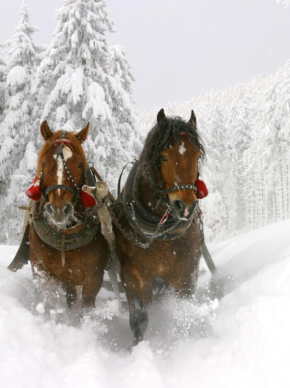 Winter Horse Blankets >> Horse-drawn sleigh ride, Hotel Saalbacher Hof, Saalbach